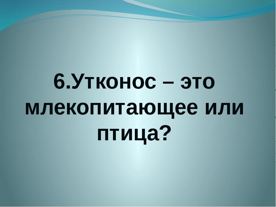 6.Утконос – это млекопитающее или птица?
