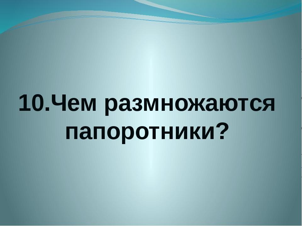 10.Чем размножаются папоротники?