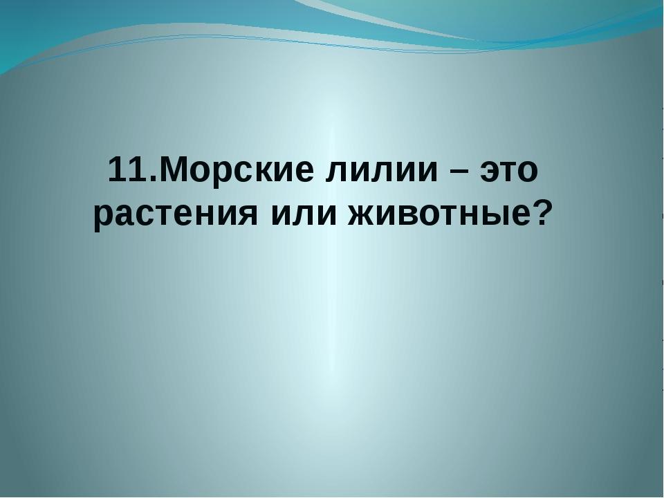 11.Морские лилии – это растения или животные?