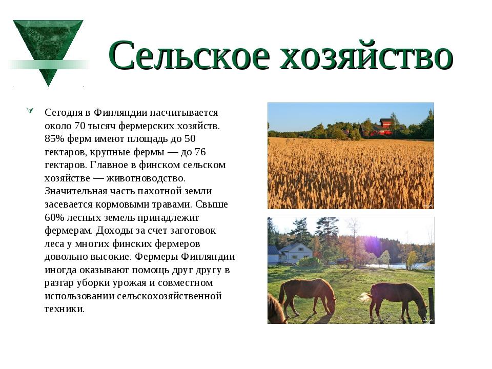 Сельское хозяйство Сегодня в Финляндии насчитывается около 70 тысяч фермерски...
