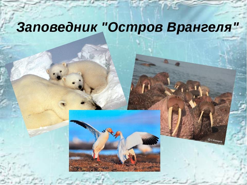 """Заповедник """"Остров Врангеля"""""""