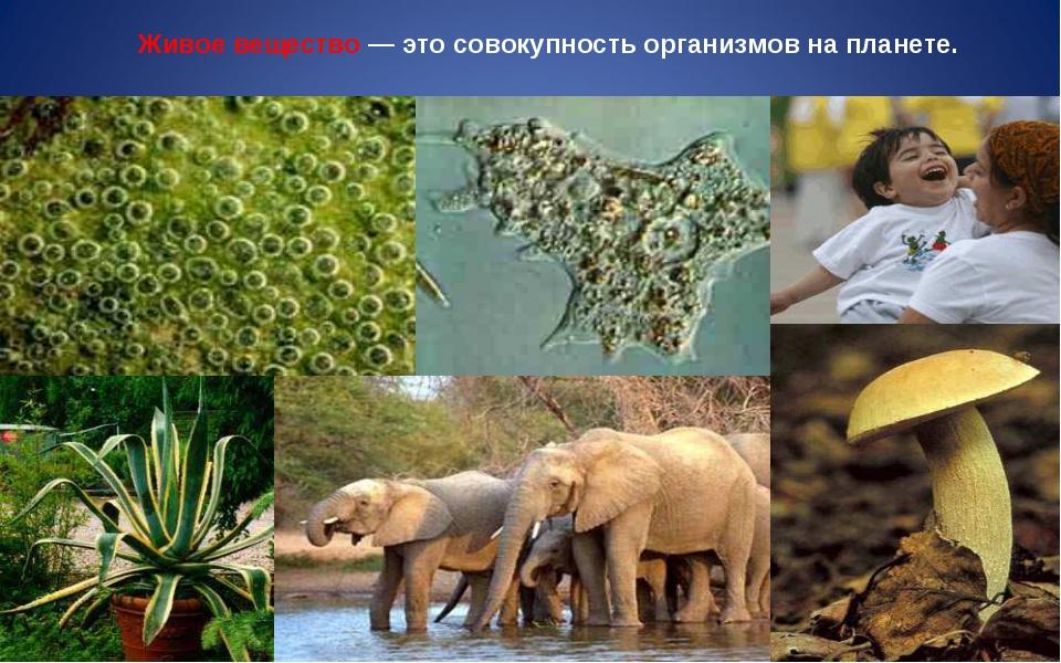 Живое вещество — это совокупность организмов на планете.
