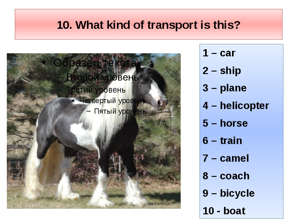 10. What kind of transport is this? 1 – car 2 – ship 3 – plane 4 – helicopter...
