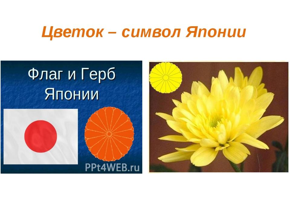 Цветок – символ Японии
