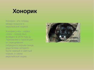 Хонорик Хонорик - это гибрид между хорьком и европейской норкой. Хонорик («хо