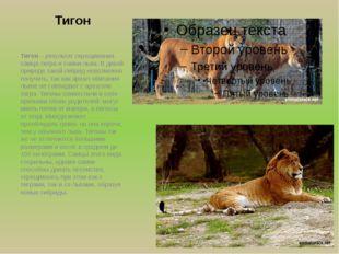 Тигон Тигон – результат скрещивания самца-тигра и самки-льва. В дикой природе