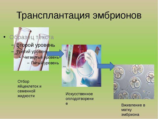 Трансплантация эмбрионов Отбор яйцеклеток и семенной жидкости Искусственное о...