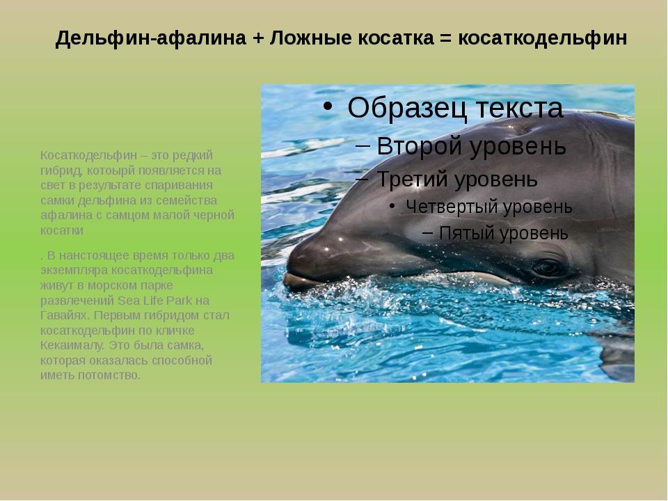 Дельфин-афалина + Ложные косатка = косаткодельфин Косаткодельфин – это редкий...