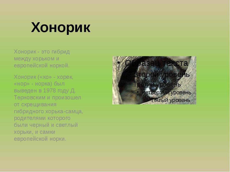 Хонорик Хонорик - это гибрид между хорьком и европейской норкой. Хонорик («хо...