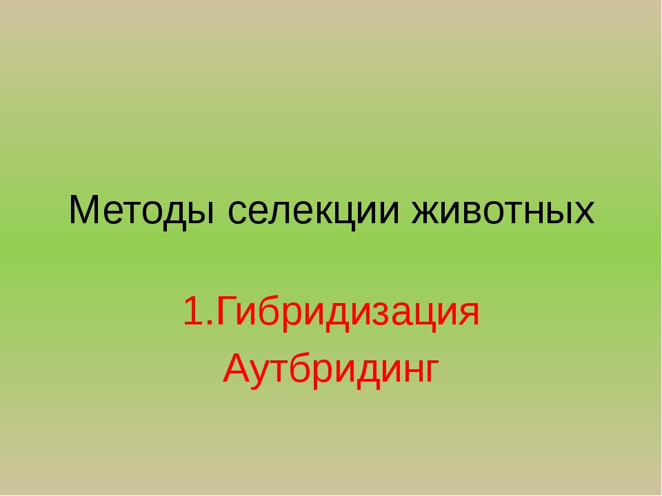 Методы селекции животных 1.Гибридизация Аутбридинг