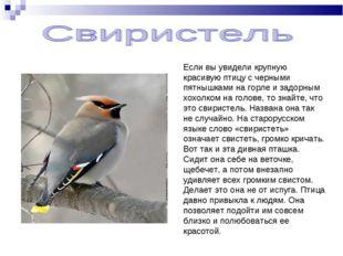 Если вы увидели крупную красивую птицу с черными пятнышками на горле и задорн