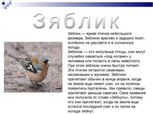 Зяблик — яркая птичка небольшого размера. Зяблики красиво и задорно поют, осо