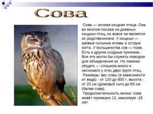Сова — ночная хищная птица. Она во многом похожа на дневных хищных птиц, но