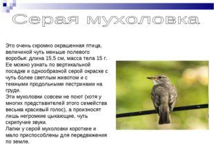 Это очень скромно окрашенная птица, величиной чуть меньше полевого воробья: д