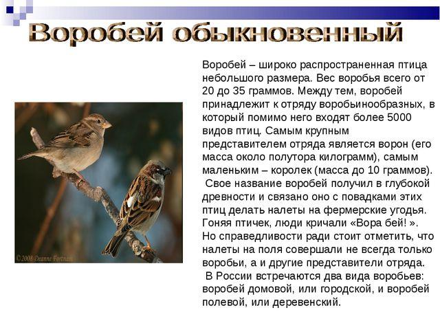 Воробей – широко распространенная птица небольшого размера. Вес воробья всего...