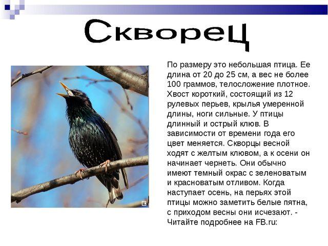 По размеру это небольшая птица. Ее длина от 20 до 25 см, а вес не более 100 г...