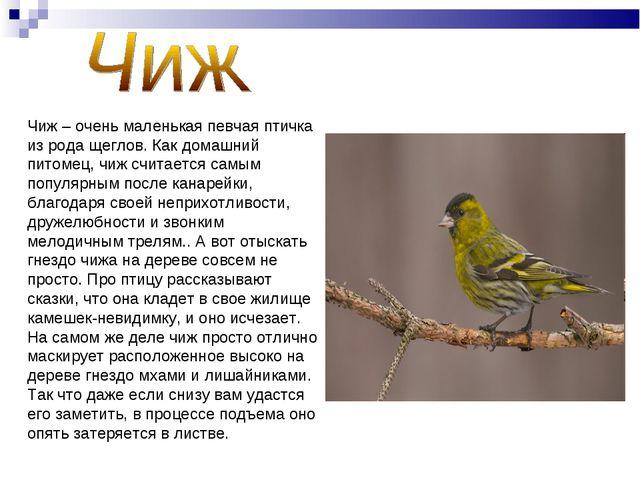 Чиж – очень маленькая певчая птичка из рода щеглов. Как домашний питомец, чиж...