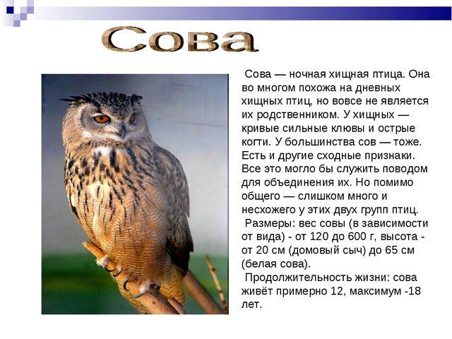 Сова — ночная хищная птица. Она во многом похожа на дневных хищных птиц, но...