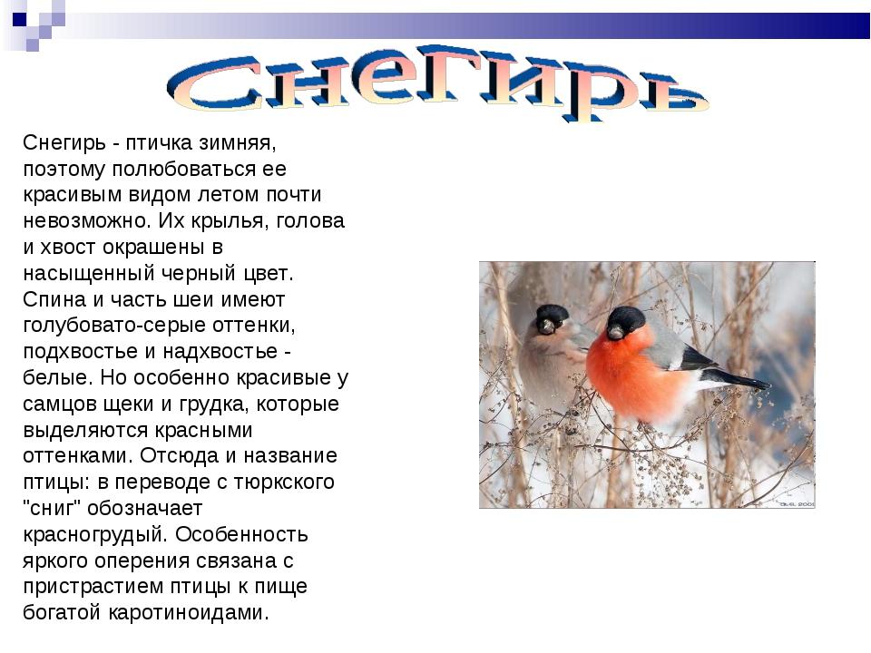 Снегирь - птичка зимняя, поэтому полюбоваться ее красивым видом летом почти н...