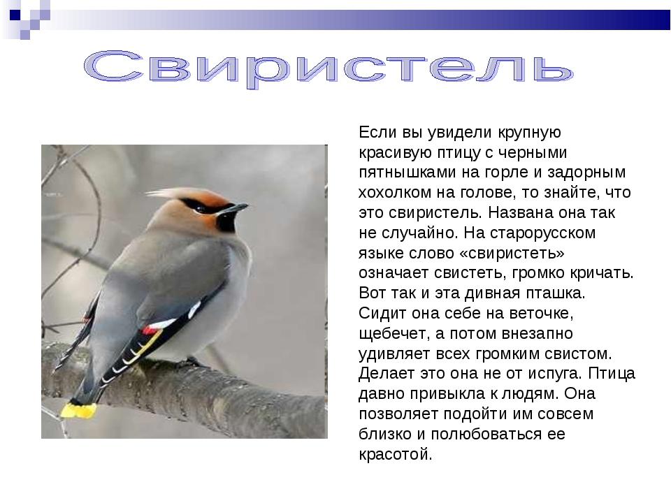 Если вы увидели крупную красивую птицу с черными пятнышками на горле и задорн...