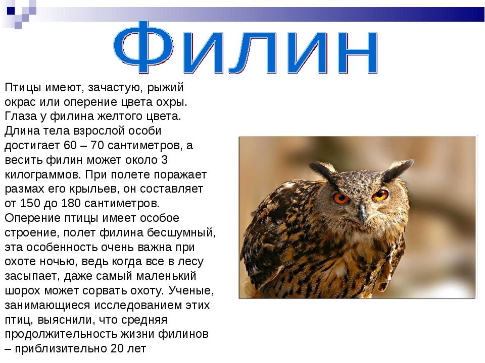Птицы имеют, зачастую, рыжий окрас или оперение цвета охры. Глаза у филина же...