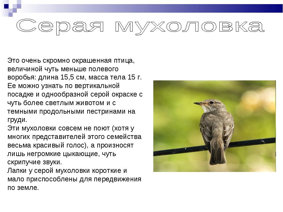Это очень скромно окрашенная птица, величиной чуть меньше полевого воробья: д...