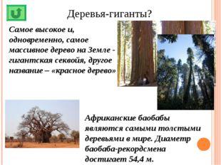 Деревья-гиганты? Самое высокое и, одновременно, самое массивное дерево на Зем