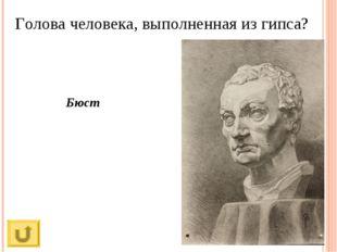 Голова человека, выполненная из гипса? Бюст