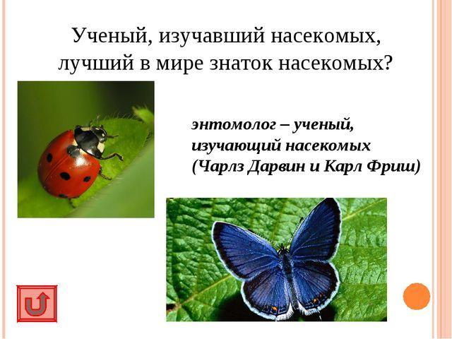 Ученый, изучавший насекомых, лучший в мире знаток насекомых? энтомолог – учен...