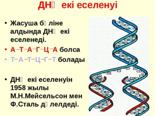 ДНҚ екі еселенуі Жасуша бөліне алдында ДНҚ екі еселенеді. А Т А Г Ц А болса Т