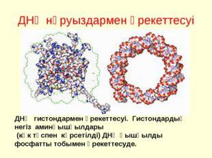 ДНҚ нәруыздармен әрекеттесуі ДНҚ гистондармен әрекеттесуі. Гистондардың негіз