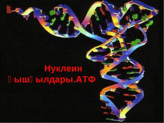 §10.Нуклеин қышқылдары.АТФ