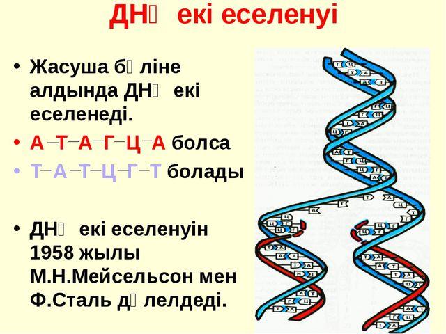ДНҚ екі еселенуі Жасуша бөліне алдында ДНҚ екі еселенеді. А Т А Г Ц А болса Т...