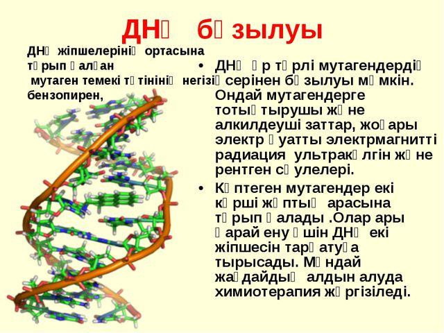 ДНҚ бұзылуы ДНҚ әр түрлі мутагендердің әсерінен бұзылуы мүмкін. Ондай мутаген...