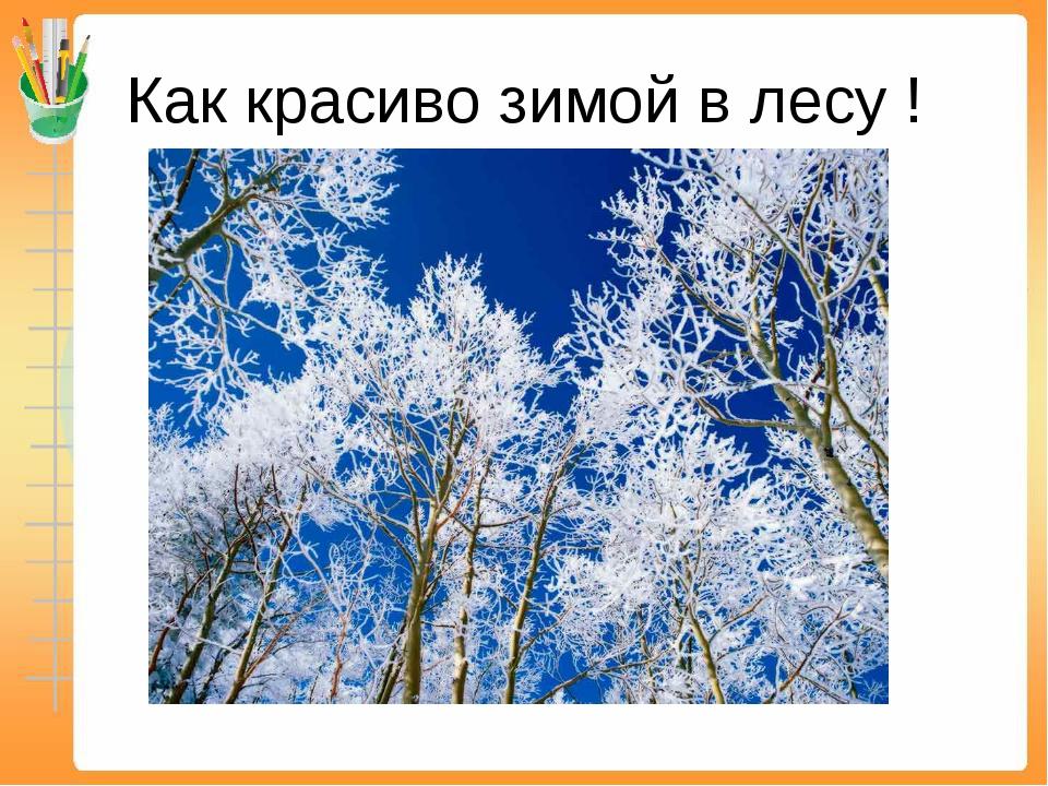 Как красиво зимой в лесу !