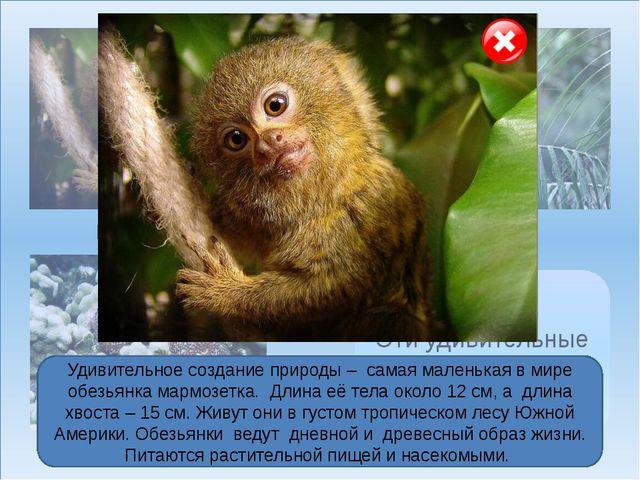 Мармозетка Гоацин Голотурия Эти удивительные животные… Удивительное создание...