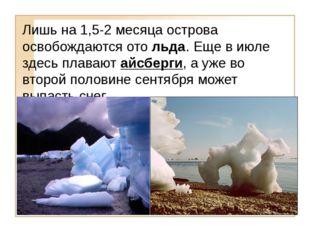 Лишь на 1,5-2 месяца острова освобождаются ото льда. Еще в июле здесь плавают