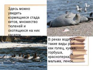 Здесь можно увидеть кормящиеся стада китов, множество тюленей и охотящихся на