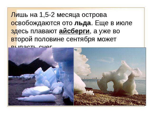 Лишь на 1,5-2 месяца острова освобождаются ото льда. Еще в июле здесь плавают...