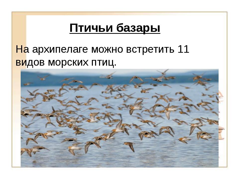 Птичьи базары На архипелаге можно встретить 11 видов морских птиц.