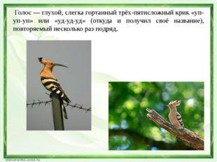 Я буду говорить названия птиц, а вы должны продемонстрировать, как поют эти п