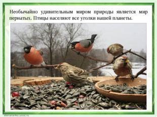 Необычайно удивительным миром природы является мир пернатых. Птицы населяют в