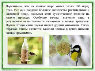 Подсчитано, что на земном шаре живет около 100 млрд. птиц. Все они поедают бо