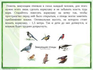 Помочь зимующим птичкам в силах каждый человек, для этого нужно всего лишь с