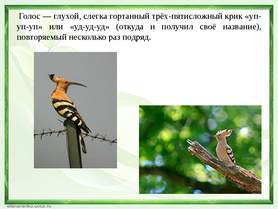 Я буду говорить названия птиц, а вы должны продемонстрировать, как поют эти п...