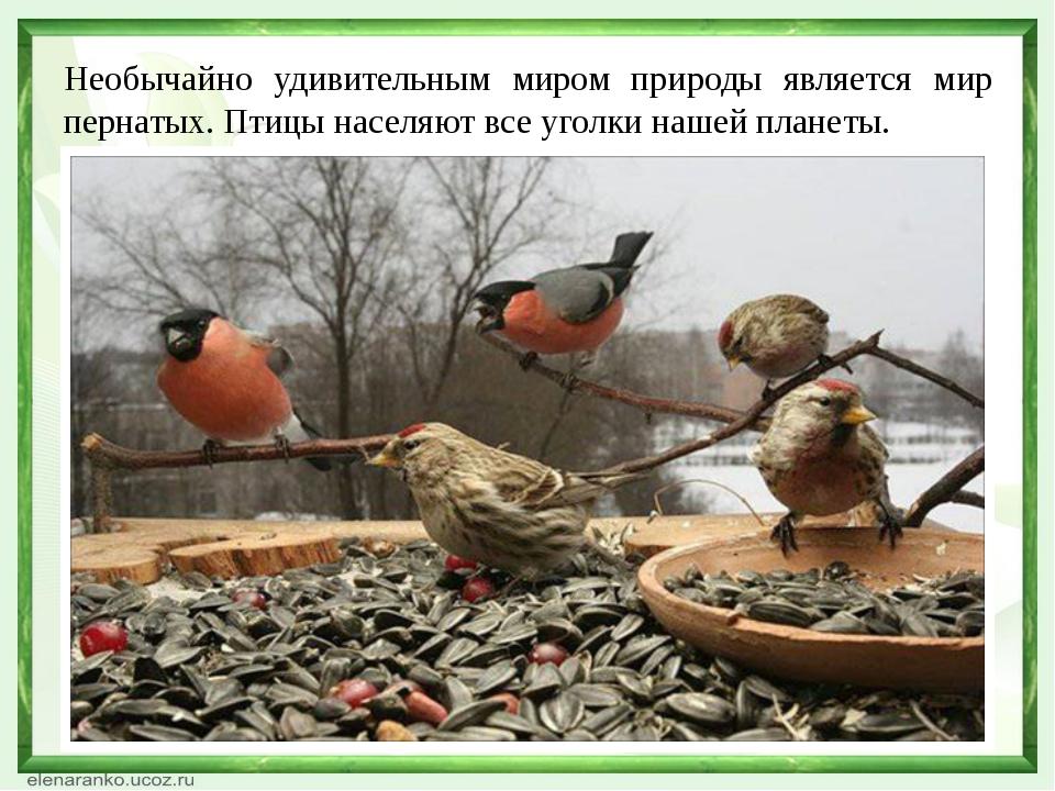 Необычайно удивительным миром природы является мир пернатых. Птицы населяют в...