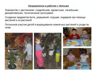 Направления в работе с детьми Знакомство с растениями: съедобными, ядовитыми,