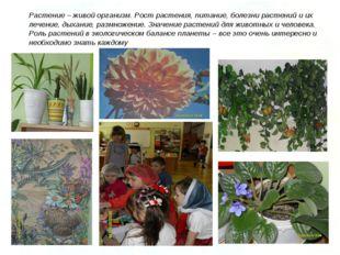 Растение – живой организм. Рост растения, питание, болезни растений и их лече