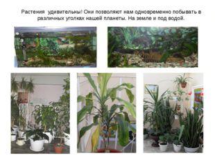Растения удивительны! Они позволяют нам одновременно побывать в различных уго