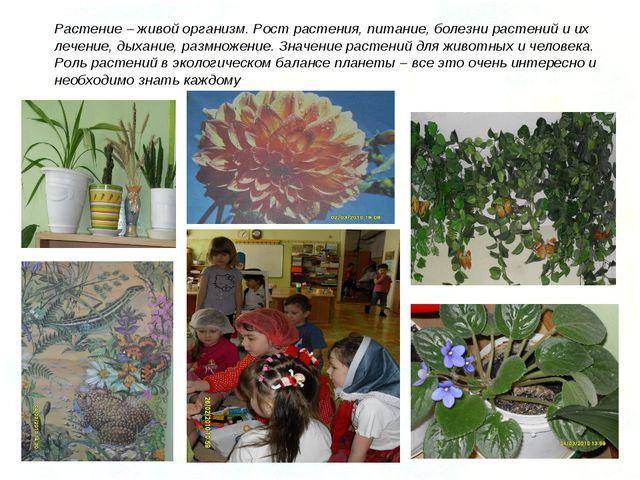 Растение – живой организм. Рост растения, питание, болезни растений и их лече...
